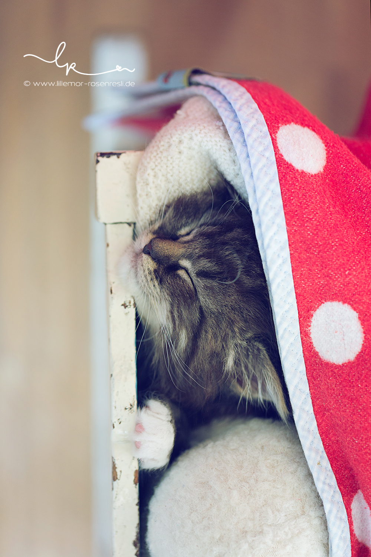 Alva, kleine Fee, kleine Elfe, Katzenkind, Katzenbaby, Babyfotografie, Lillemor Fotografie, Bietigheim-Bissingen
