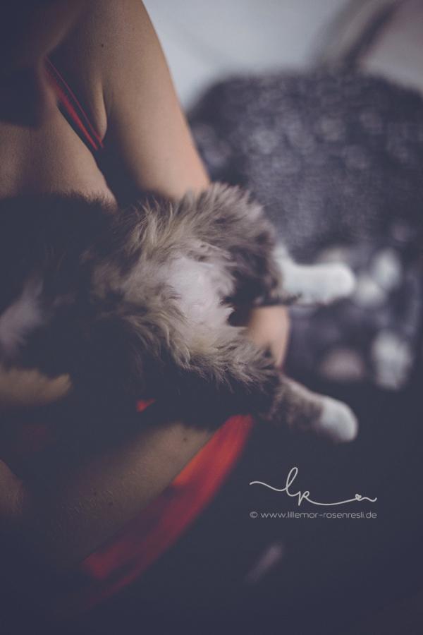 Alva, Katzenkind; Perserkätzchen, samtpfötchen, Lillemor & Rosenresli, Fotografie, Bietigheim-Bissingen