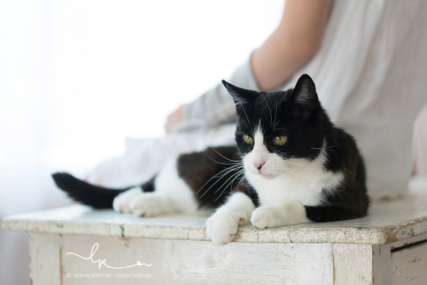 Jule, Katze, Schwarzweisschen; Lillemors Katzenmädchen