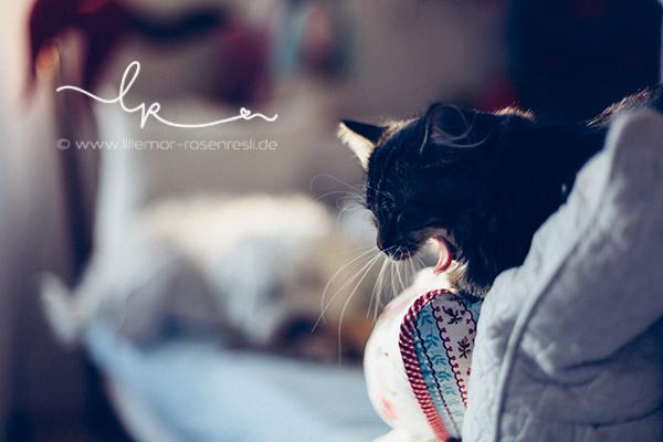 Katzenkind Alva, Tibet Terrier Wanja, Lillemor Lifestyle-Fotografie, Bietigheim-Bissingen
