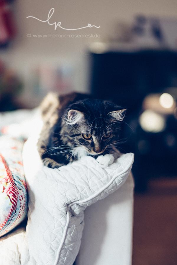 Katzenkind Alva, Lillemor Lifestyle-Fotografie, Bietigheim-Bissingen