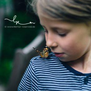 Schmetterlingsgarten, insect lore, Distelfalter, kleines Wunder, Metamorphose, Lillemor, lebendige Fotografie, Bietigheim-Bissingen