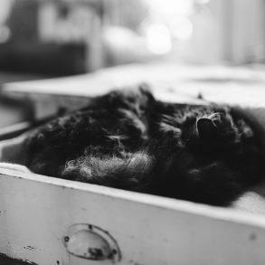 Katzenkind Alvas erster Geburtstag, Tierfotografie, Bietigheim-Bissingen, Michèle Brunnmeier