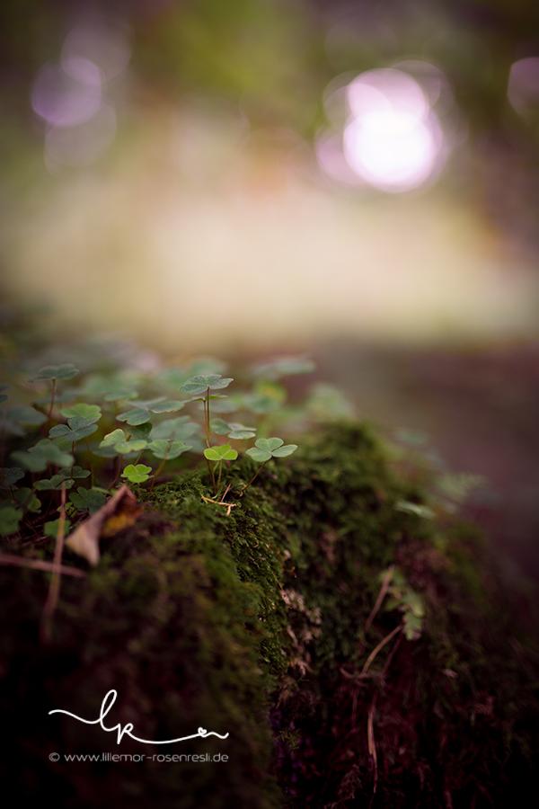 Waldtag, Naturfotografie
