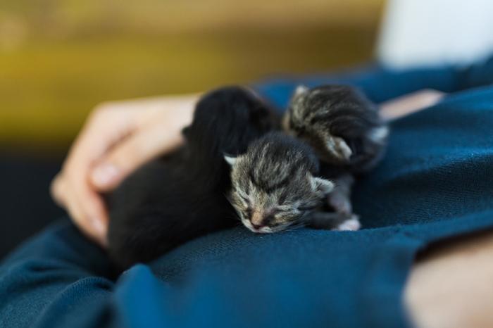 Alvas Katzenkinder