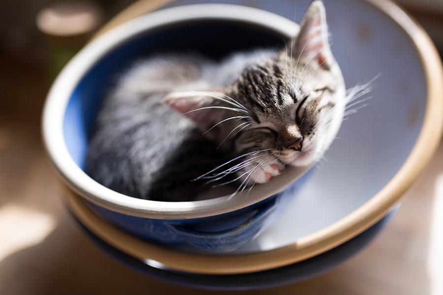 Alvas Katzenkind in der Schüssel