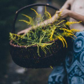 Pflanzenfärben, pflanzengefärbt, Goldrute, Pflanzenfärberei, natural dye plant dying